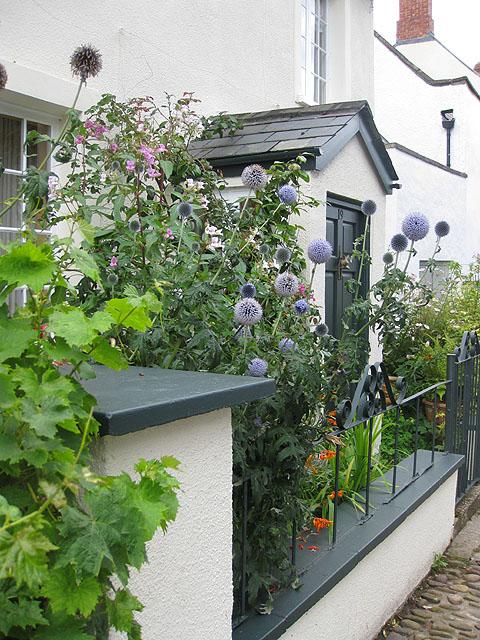 A_small_front_garden