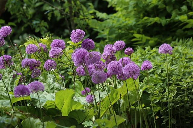 flower-807252_640